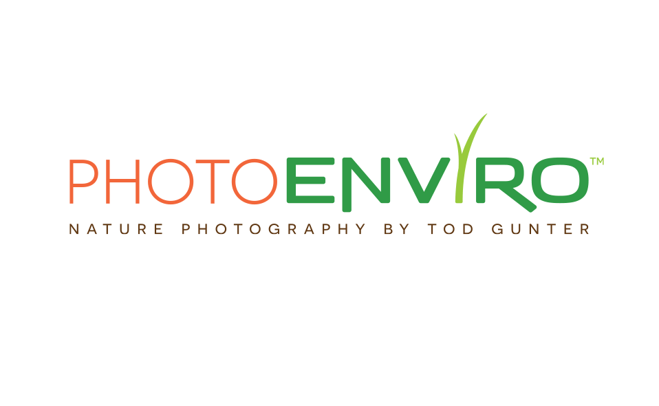 Logo for my part-time nature photography business.